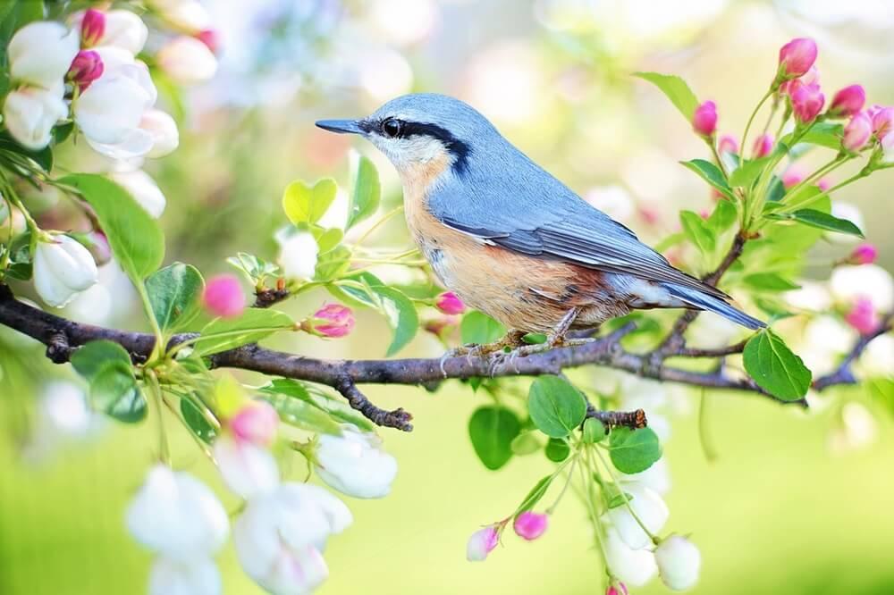 春の青い鳥