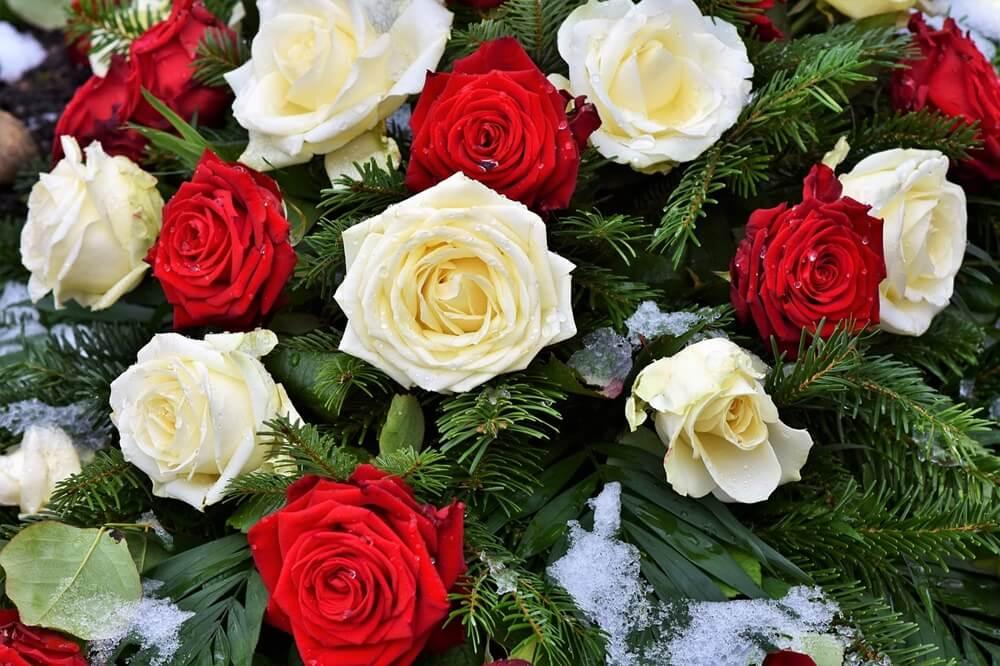 白バラと紅バラ