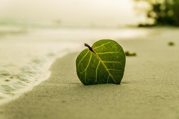 浜辺にある葉っぱ
