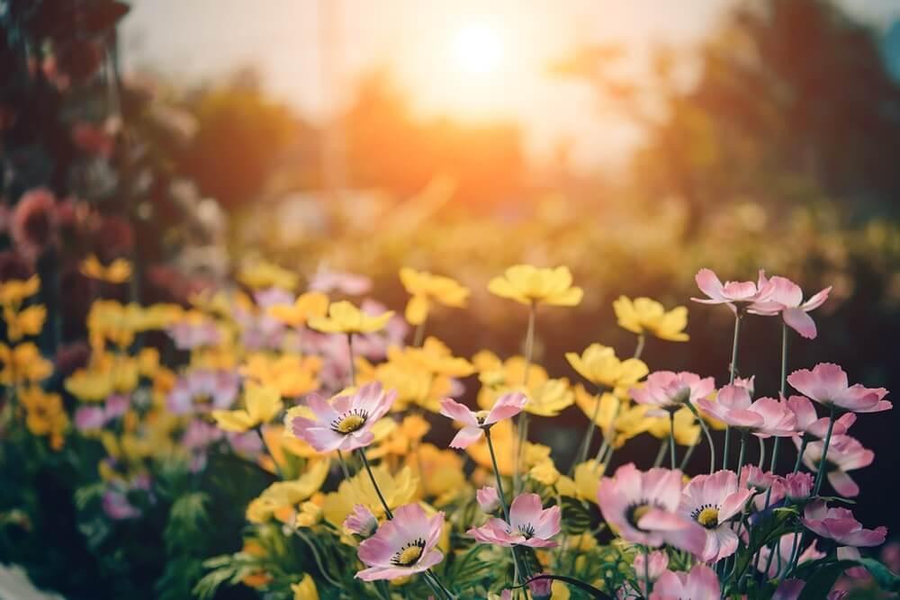 花の咲く庭